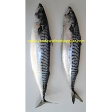 Ikan Saba (Mackerel Fish)