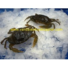 Soft Shell Crab (Kepiting Soka)
