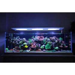 jual akuarium termurah