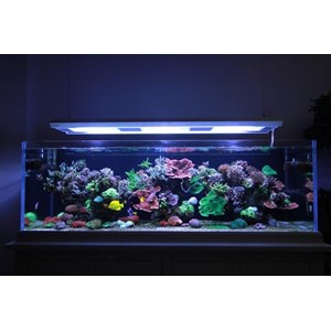 jual akuarium termurah By Toko City Aquaworld Surabaya