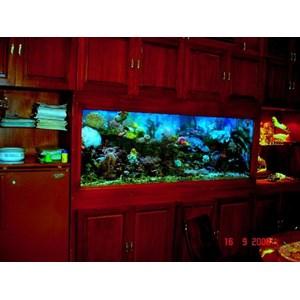 jual akuarium cantik By City Aquaworld Surabaya