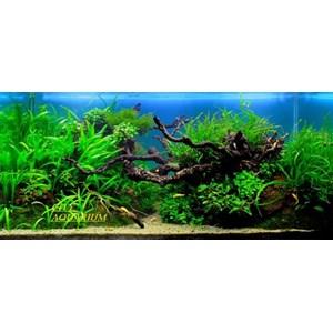 harga akuarium surabaya By Toko City Aquaworld Surabaya