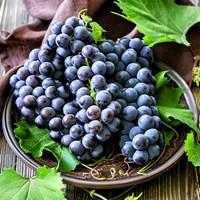 Jual Buah Segar Anggur Hitam Autumn Royal Distributor Grosir Supplier Agen Buah Import