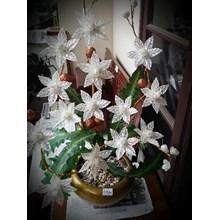 [Bunga Plastik Artificial] Bunga Putih (Sep.16.02.