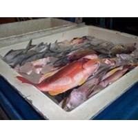 Jual Ikan Laut Dan Ikan Tawar