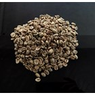 Kopi Luwak Arabica Green Bean 1