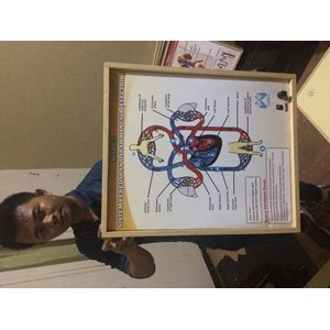 Alat Peraga Pendidikan Maket Elektrik Peredaran Darah Manusia