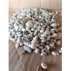 Multicolor Small Stone 1