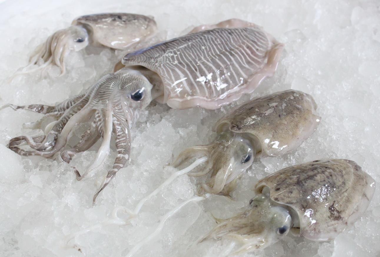 What Is The Cuttlefish S Favorite Food