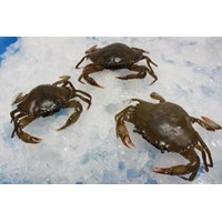 Frozen Whole Round Soft Shell Crab