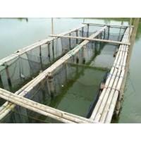 Jual Peralatan Perikanan Waring Jaring Ikan 2