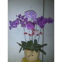 Jual Bunga Meja 2