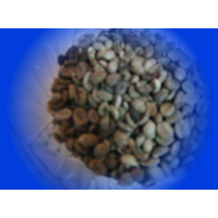 Balinese Arabica Coffee Beans 1