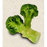 Jual Broccoli