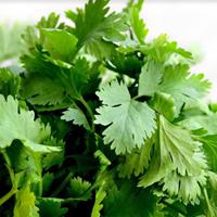 Sayuran Segar Daun Seledri