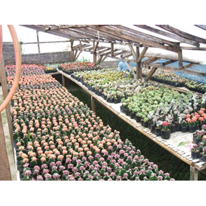 Sell Cacti And Succulents From Indonesia By Pt Erik Kaktus