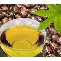 Kimia Farmasi - Castor Oil