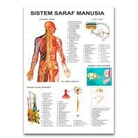 Carta Sistem Saraf Manusia