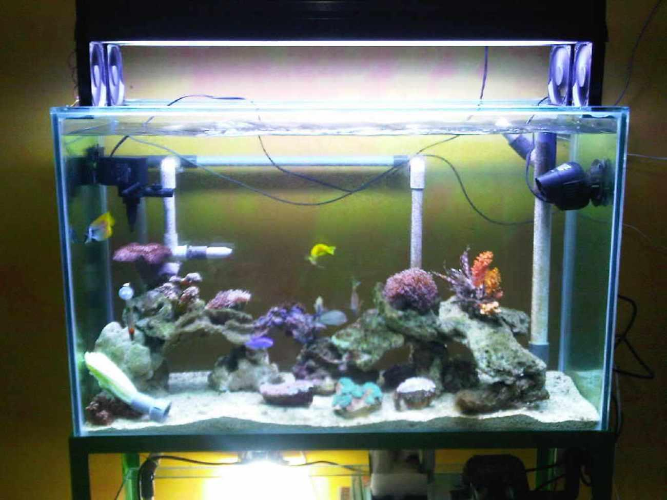 Sell Glass Aquariums Custom Design With Quality Guaranteed