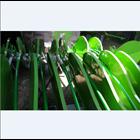 Lamp Lights Leaf Kapuas 1
