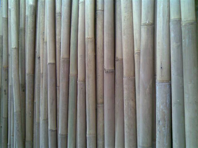 Sell Bamboo Apus From Indonesia By Cv Rumpun Bambu