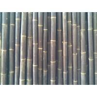 Jual Bambu Hitam