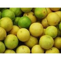 Jual Jeruk Lemon