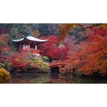 WH01 - Land Tour 5D Tokyo Kyoto Osaka Super Saver Only Rp. 8.690.000/Pax