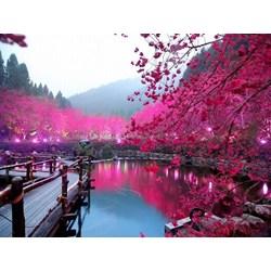WH08 - 7D Kimono - Tokyo Osaka Shirakawago + Hanami Sakura From Rp. 27.150.000/Pax By GA By Callista Tour