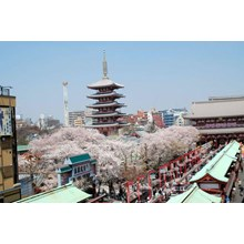 WH01-7D5N JAPAN SAKURA OKOJU + SHIRAKAWAGO By GA FROM : RP. 21.788.000/PAX
