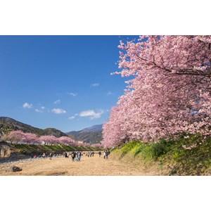 6D4N Tokyo Kawazu Hakuba Karuizawa Period Feb (WH38)  IDR 21.800.000 /PAX Flight By: ANA AIRLINES