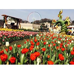 6D4N Wonderful Korea Busan Jeonju In Spring (Dep 10-15 Apr'18) All In Price IDR 9.999.000 /PAX Flight By: ASIANA AIRLINES