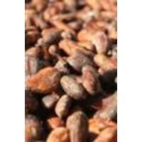Jual Biji Kakao