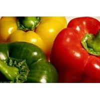 Sayuran Paprika Hidroponik