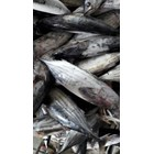 ikan cakalang 1