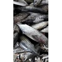 Ikan Cakalang 5