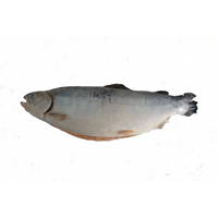 Jual Salmon Norway
