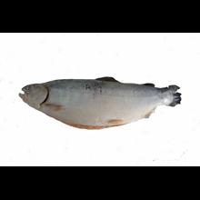 Salmon Norway