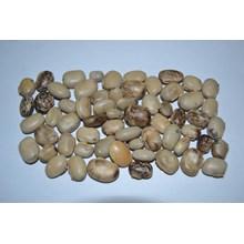 Kacangan Mucuna cochinensis (MC)