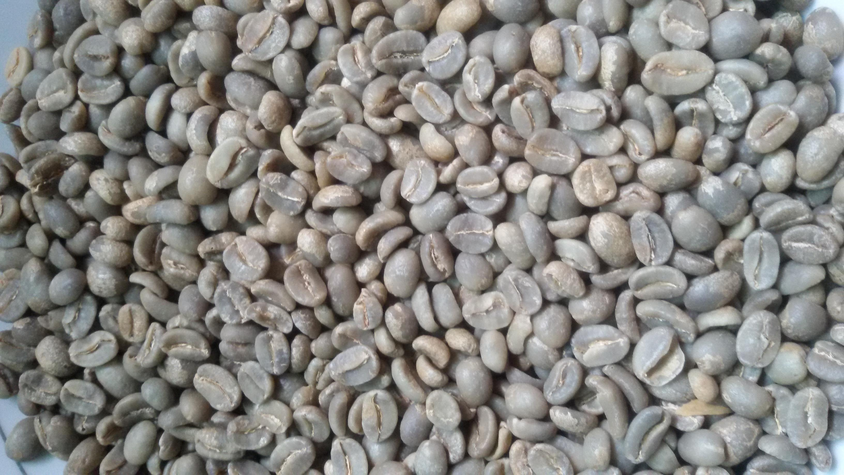 export biji kopi mentah sumatera arabika g1 from indonesia
