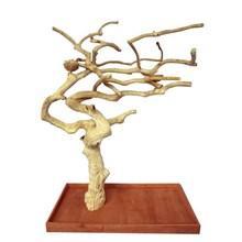 Bermain pohon kayu Jawa berdiri, burung bertengger, burung beo berdiri, pemasok memproduksi kerajinan kayu