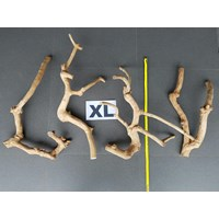 Kerajinan Kayu Java Wood Bird Perches Branches Coffee Tree Java Wood Multibranches