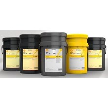 Oli Shell Morlina