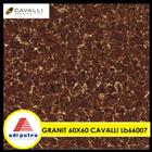 Granit Cavalli 60X60 5