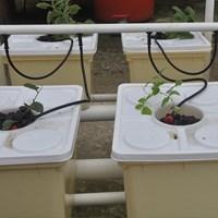 Distributor Jirifarm Hidroponik Sistem Dutch Bucket 4 Pot Diameter 10 Cm (Taman) 3