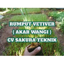 Vetiver Grass Guard Ground Grounds Of Landslide
