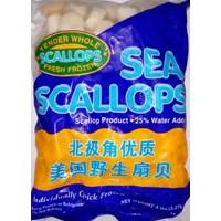Jual Seafood Beku Sceallop