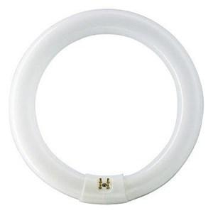 LAMPU PHILIPS TL - E 22W - 54 Ring