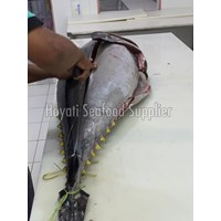 Jual Fresh Tuna