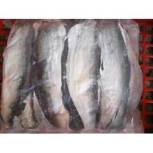 Ikan Beku dan Fillet Kulit Ikan Patin